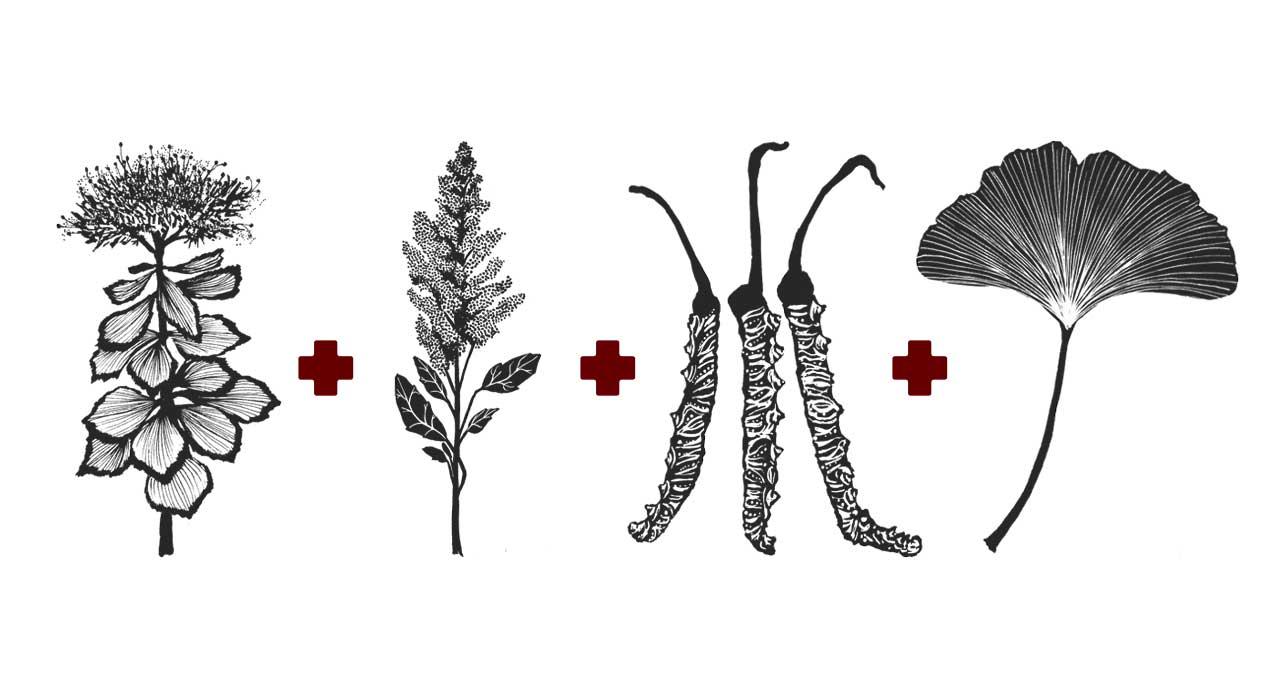 Quinoa-Cordyceps-ginkgo-rrosea-Mischung